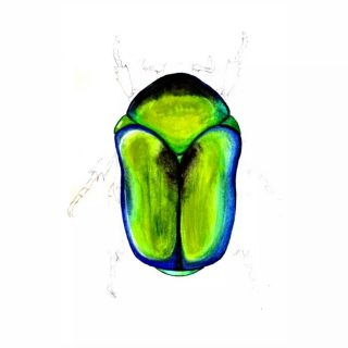 Primul studiu pentru reproducerea reflexelor irizante în acuarelă pe un gândăcel imaginar. 💙💚 @academia.illustraciencia @claracervino  #iridescent #bugs #watercolorstudy for #scientificillustration #iridescentia #bichos #ilustraacuarela #ilustraciencia #reflexe #irizații #acuarelă