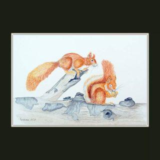 Și cei doi roșcovani au ajuns în casă nouă, la un băiețel curios, care iubește animalele și natura. #watercolor #inspiredbynature #wildlife #wildlifeart #illustration #watercolorillustration #naturalhistoryillustration #squirrels #squirrelsofinstagram