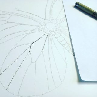 #newproject #stippling #punteado #ink #tinta #blackandwhite #butterfly #practice #scientificillustration #ilustraciencia #relaxingtime
