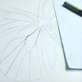 #newproject #stippling #punteado #ink #tinta #blackandwhite #butterfly #practice #scientificillustration #ilustraciencia #relaxingtime